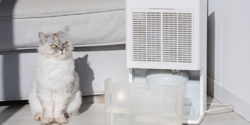 How quickly a dehumidifier fills up