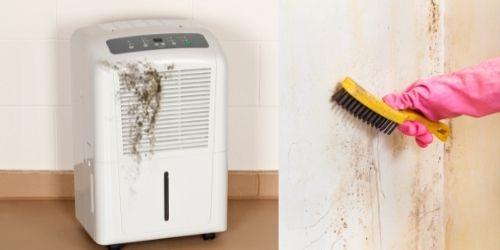 Cleaning moldy dehumidifier
